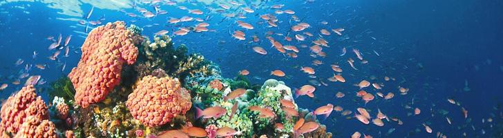 Philippines Scuba Diving 2015