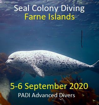Farnes Seal Diving